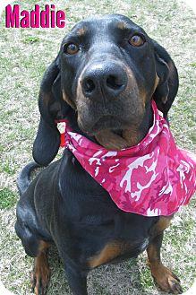 Black and Tan Coonhound Mix Dog for adoption in Menomonie, Wisconsin - Maddie