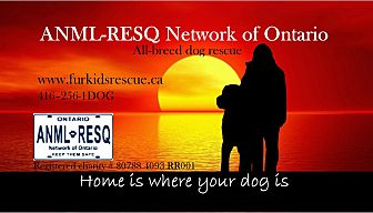 Akbash Mix Dog for adoption in Caledon, Ontario - Our Adopted Dogs of 2016 Video
