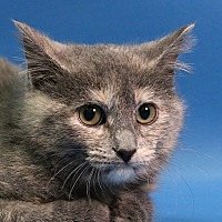 Adopt A Pet :: Willow - Overland Park, KS