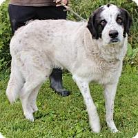 Adopt A Pet :: Elsie - Hillsdale, IN