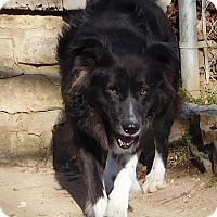 Adopt A Pet :: L.L. Drool J - House Springs, MO