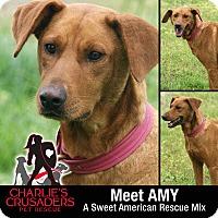 Adopt A Pet :: Amy - Pottstown, PA