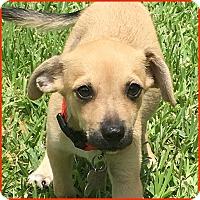 Adopt A Pet :: Porter - Homestead, FL
