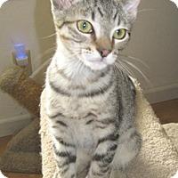 Adopt A Pet :: Kepler - North Highlands, CA
