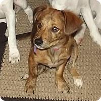 Adopt A Pet :: Yogi - Danbury, CT