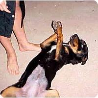Adopt A Pet :: Taxi - Scottsdale, AZ