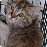 Adopt A Pet :: Nala - Modesto, CA