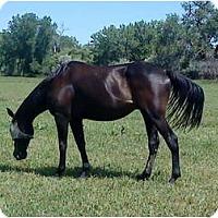 Adopt A Pet :: Thunder - Pueblo, CO