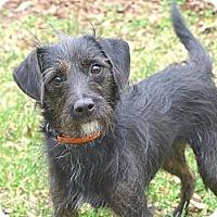 Adopt A Pet :: Wren - Mocksville, NC