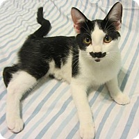 Adopt A Pet :: Cliff - Norwich, NY
