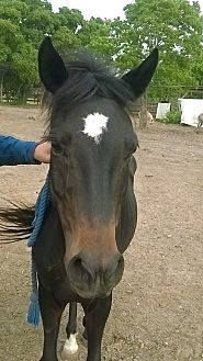 Quarterhorse/Pony - Other Mix for adoption in Hitchcock, Texas - Flicka