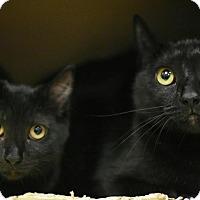 Adopt A Pet :: Gertie - Aiken, SC