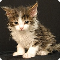 Adopt A Pet :: Crocket - Newland, NC