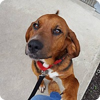 Adopt A Pet :: Grits - Wappingers, NY