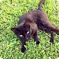 Adopt A Pet :: Snapchat - Waggaman, LA