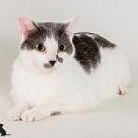 Adopt A Pet :: Marty - Savannah, GA