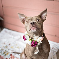Adopt A Pet :: Ruby - Fort Valley, GA