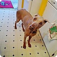 Adopt A Pet :: Harry - New Richmond, OH