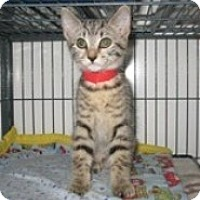 Adopt A Pet :: Willow - Shelton, WA