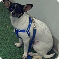 Adopt A Pet :: Rowdy ~ Courtesy listing - San Angelo, TX
