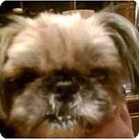 Adopt A Pet :: JoJo - Hales Corners, WI