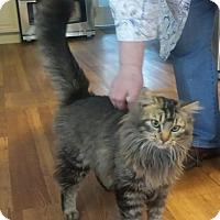 Adopt A Pet :: Thor - Modesto, CA