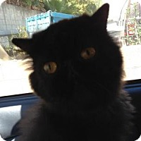 Adopt A Pet :: Stormy - Beverly Hills, CA
