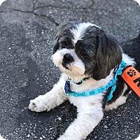 Adopt A Pet :: Oreo - La Mirada, CA