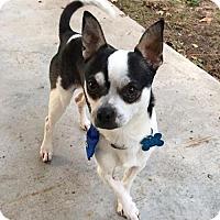Adopt A Pet :: Mills - Houston, TX