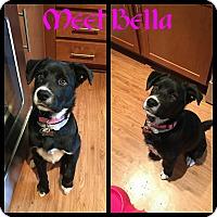 Adopt A Pet :: Bella - Fredericksburg, VA