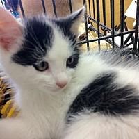 Adopt A Pet :: Brian - Redondo Beach, CA