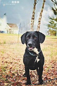 Dachshund/Beagle Mix Dog for adoption in Fayetteville, Georgia - Freda