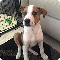 Adopt A Pet :: Murphy - Broken Arrow, OK