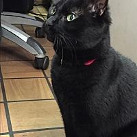 Adopt A Pet :: Amelia - Fox River Grove, IL