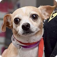 Adopt A Pet :: Oren! Polite & Sweet! - New York, NY