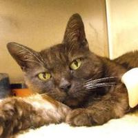 Adopt A Pet :: Fudge - Middletown, OH