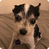 Adopt A Pet :: Aldo! *Los Angeles* - Los Angeles, CA
