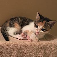 Adopt A Pet :: Bashful - Garner, NC