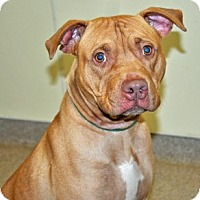 Adopt A Pet :: Randy - Port Washington, NY