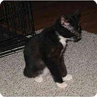 Adopt A Pet :: Thumbelina (tummy) - Amarillo, TX