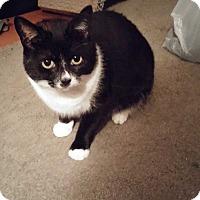 Adopt A Pet :: Minnie - Lenhartsville, PA