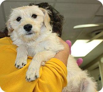 Terrier (Unknown Type, Medium) Dog for adoption in Cottageville, West Virginia - Jo Ellen