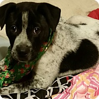Adopt A Pet :: Iggy - Detroit, MI