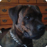 Adopt A Pet :: Dozer - Treton, ON