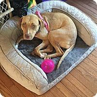 Adopt A Pet :: Caroline - Westminster, MD