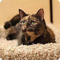 Adopt A Pet :: Mabel - Richmond, VA