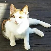 Adopt A Pet :: Tranquila - Lindenhurst, NY