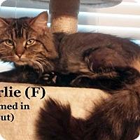 Adopt A Pet :: Charlie - Bentonville, AR