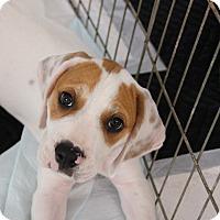 Adopt A Pet :: Oscar - Ft. Myers, FL