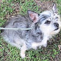 Adopt A Pet :: Katie - Winnsboro, SC
